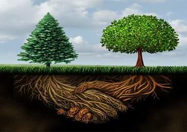 Ağaçlar birbirleriyle konuşabilir mi?