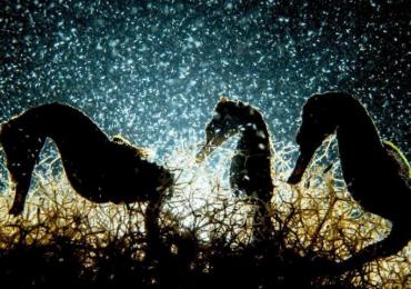 yılın en iyi su altı fotoğrafları